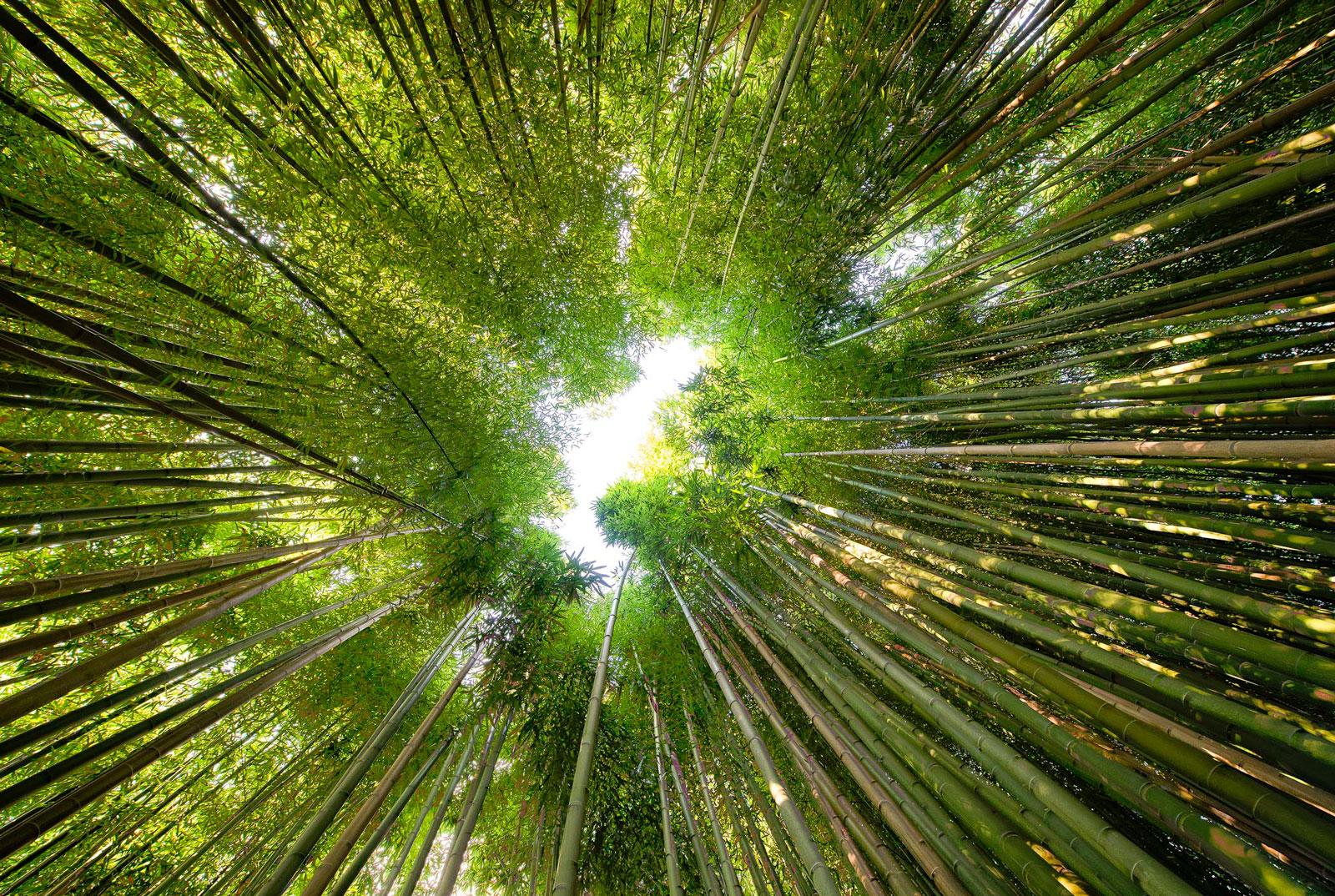 Boschetto bambù Terme di Stigliano