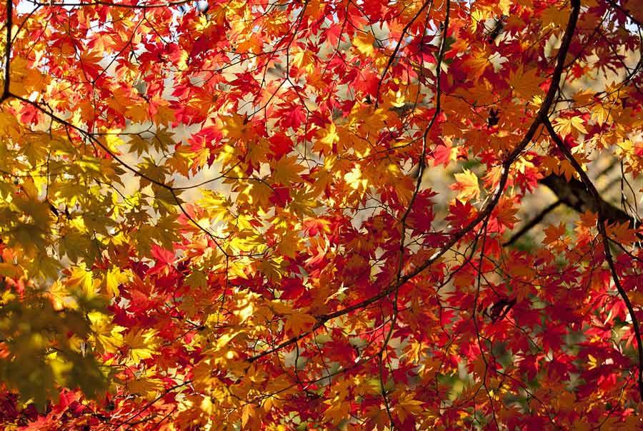 Foliage nella Tuscia con un week end alle terme